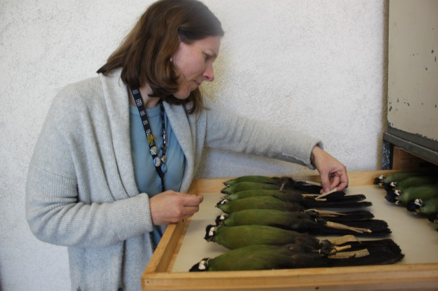 Allison looking at Turaco collections