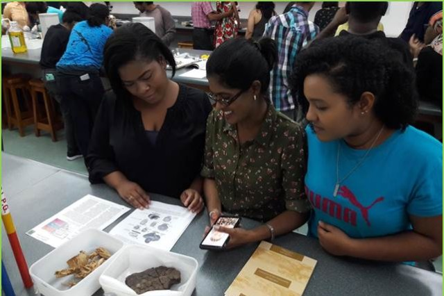 Three students from University of the West Indies at St. Augustine, Trinidad, examining undescribed fossils