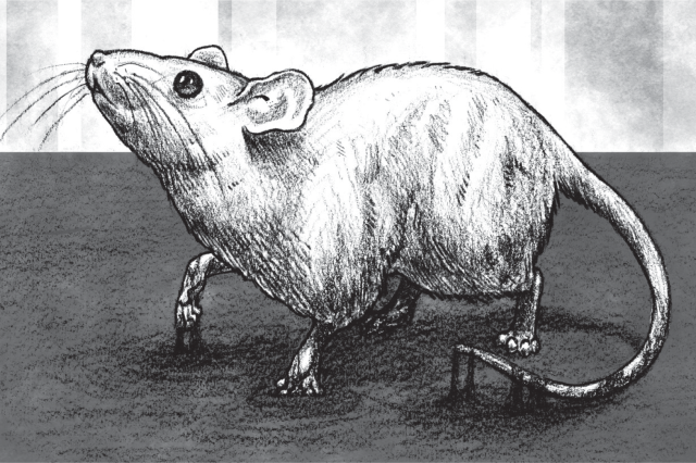 """It came from the Tar Pits"" graphic novel rat illustration"