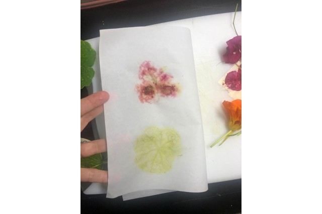 Paper showing transfer of colorful plant pigments