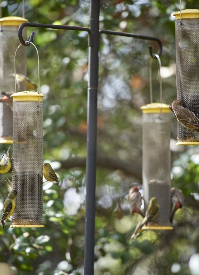 A group of birds make use of the feeds at the Museum's bird watching platform