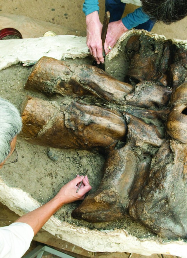 Aerial photograph of two people cleaning mammoth fossil