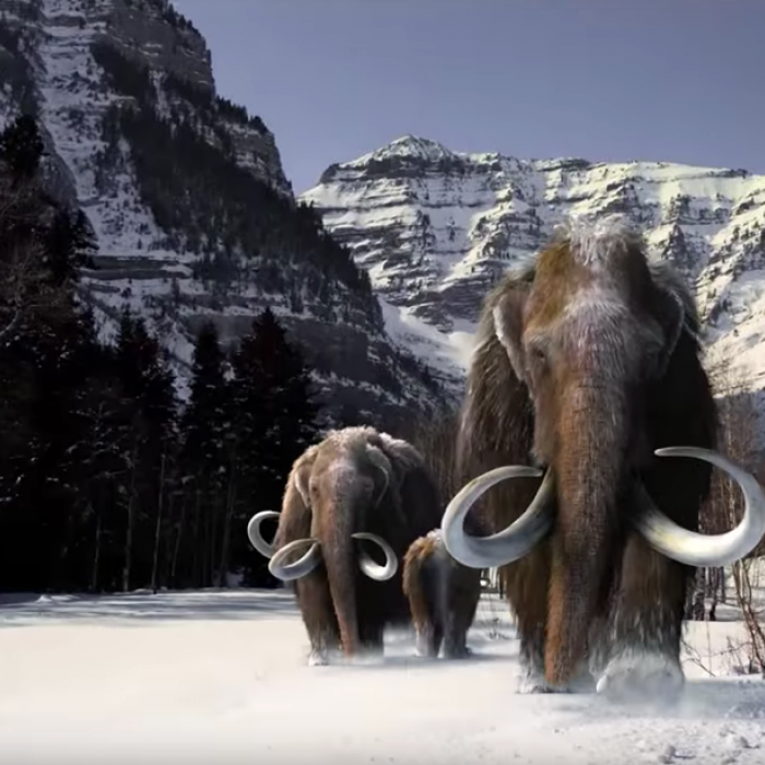 Image of mammoths