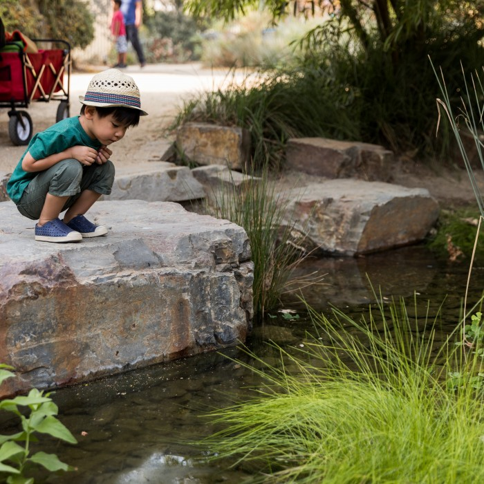 Little boy in hat crouches on a low rock ledge and looks into the nature gardens pond