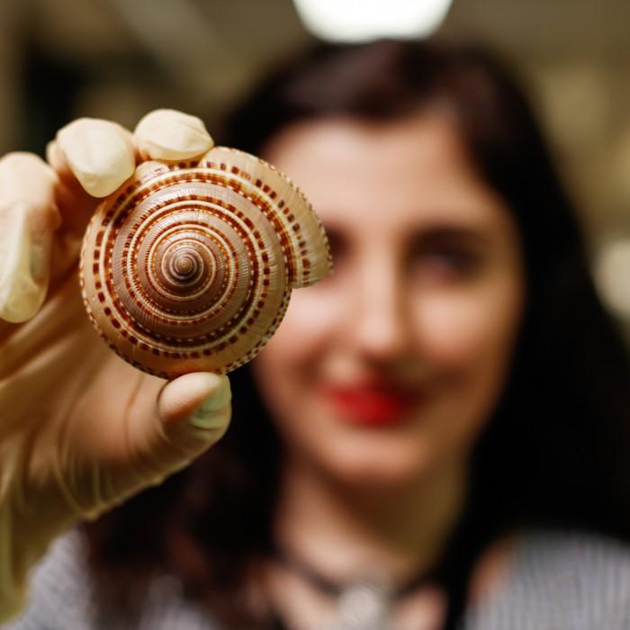 intern LUIZA BARSEGHYAN holds sundial shell