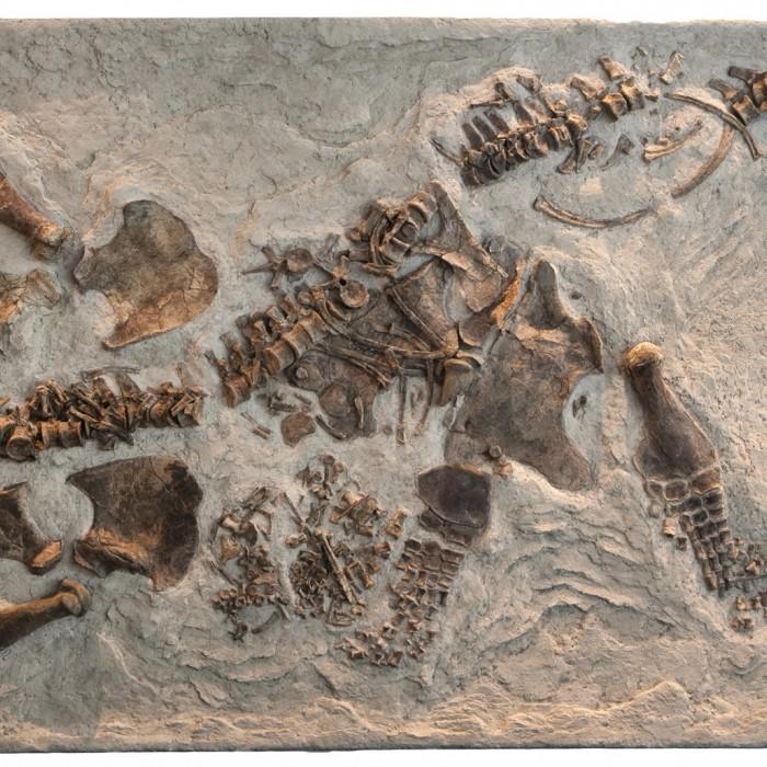 Fossil - Paleontology up close
