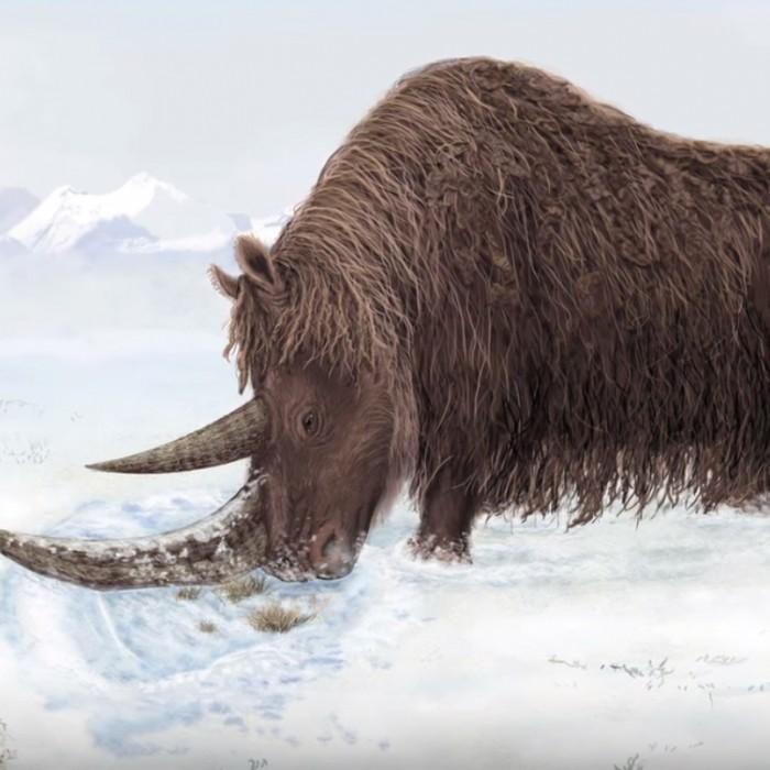 Woolly rhino in snow - illustration