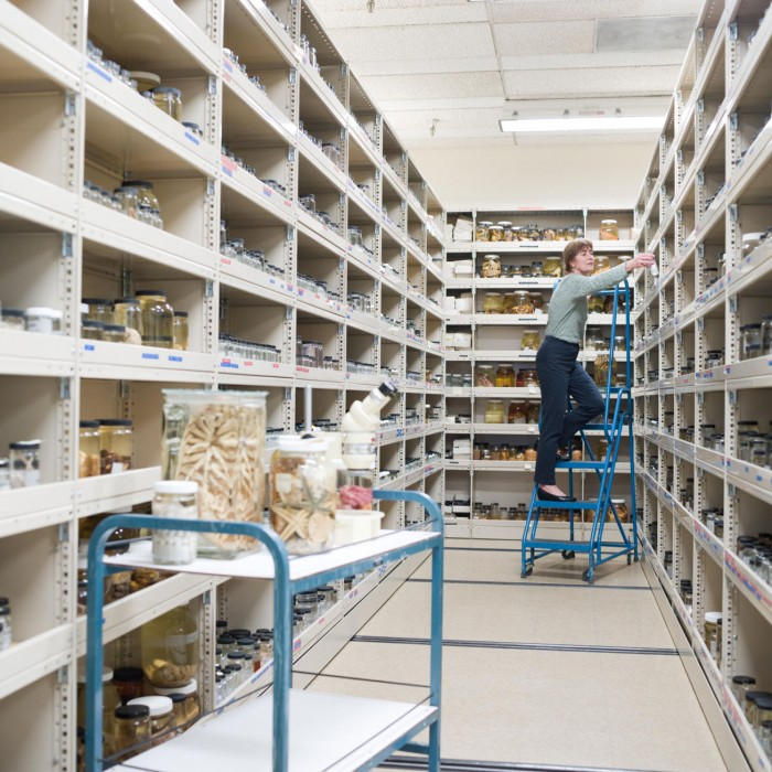 Curator in collections storage room