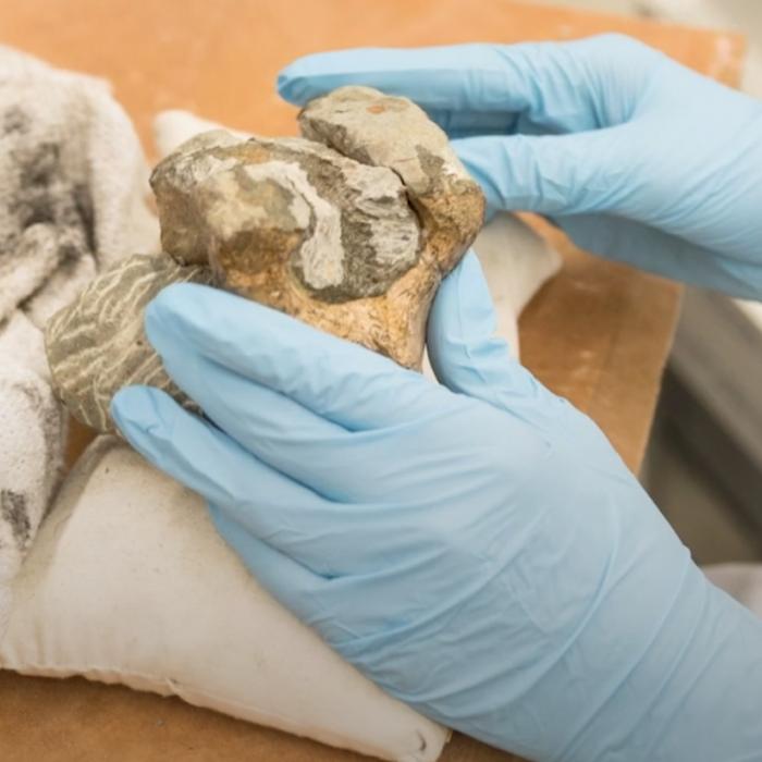 Turtle fossil prep
