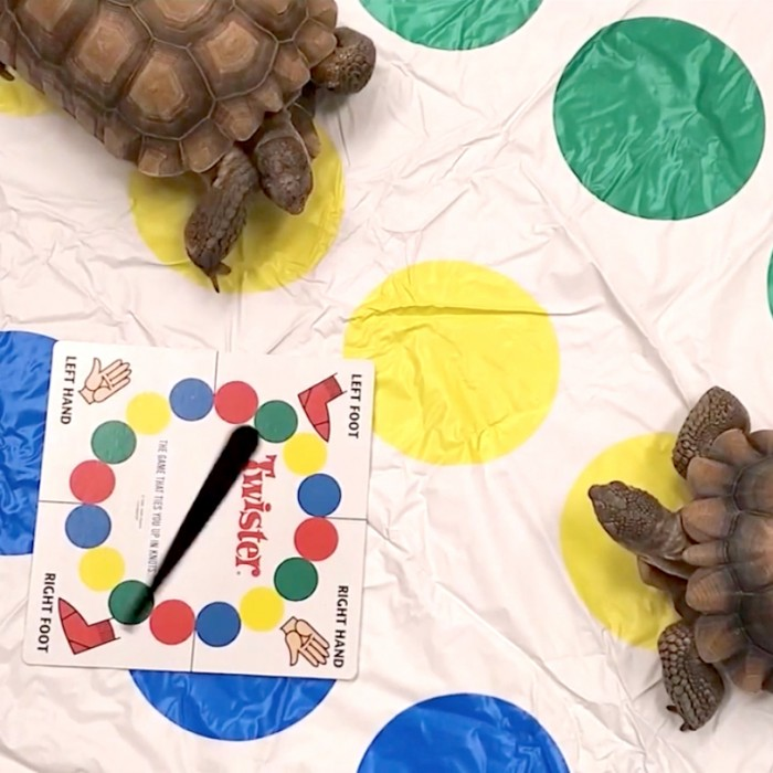 Two turtles on a Twister board game set
