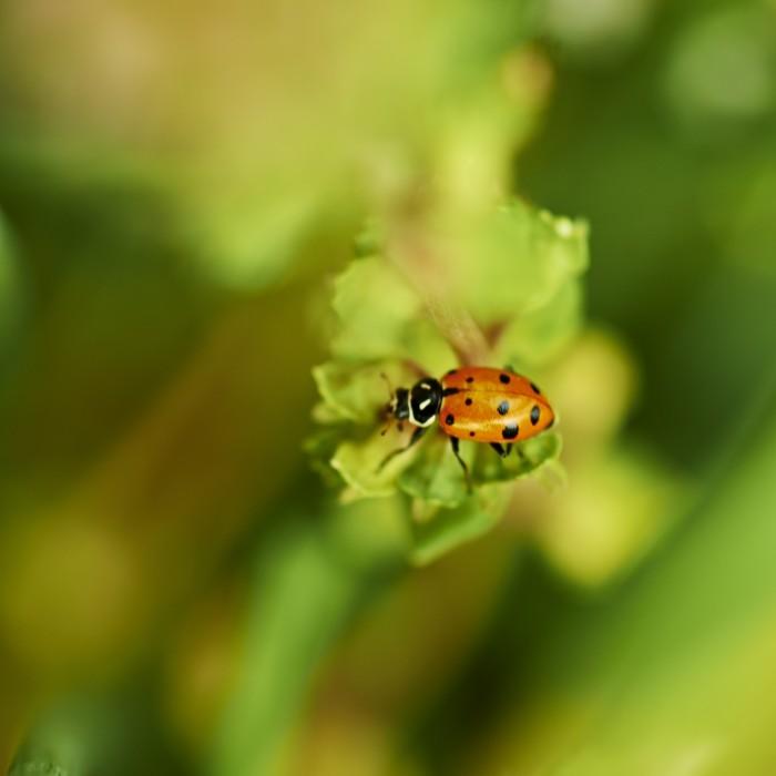 Image of ladybug resting on a plant