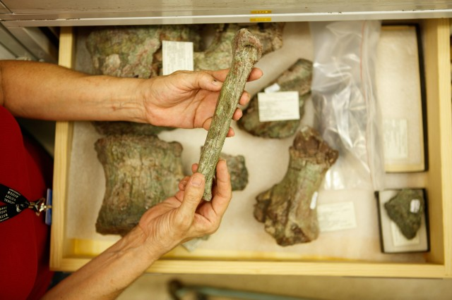 collections manager holding bone in dinosaur institute research and collections