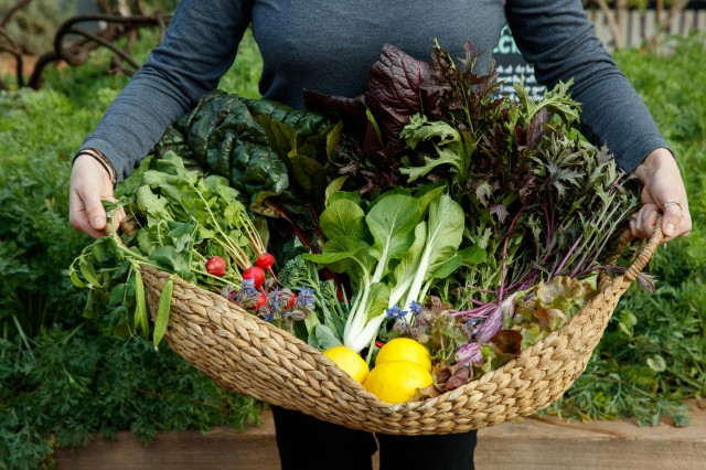 Join a Gardener to find out what we're harvesting in our Edible Garden!
