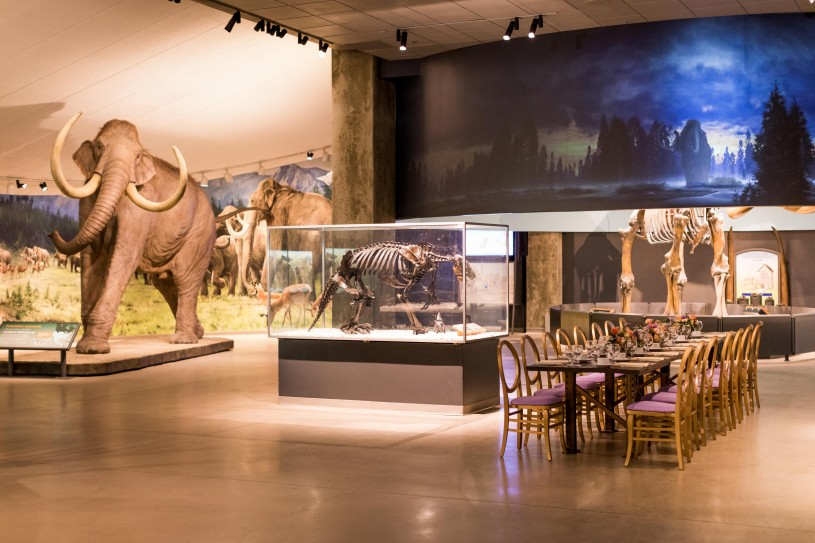 special event setup in museum la brea tar pits