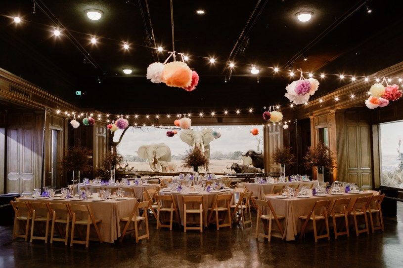 special event setup african mammal hall wedding