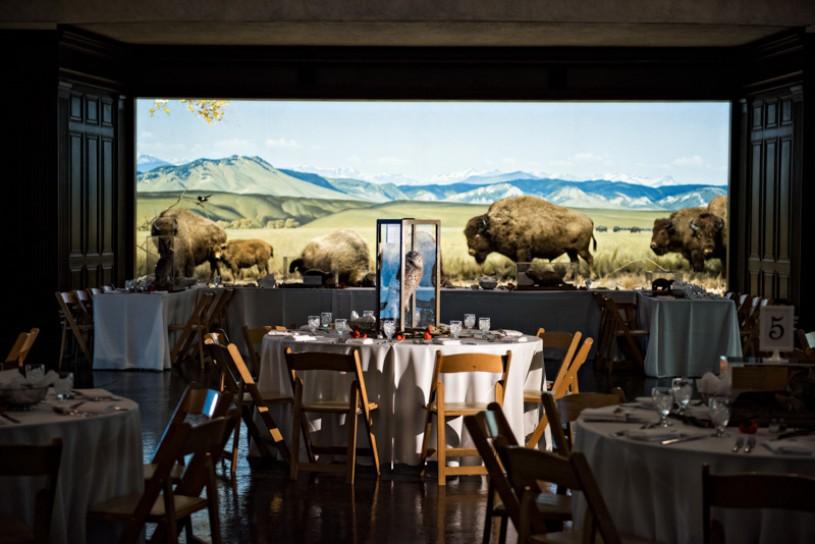 wedding setup north american mammal hall