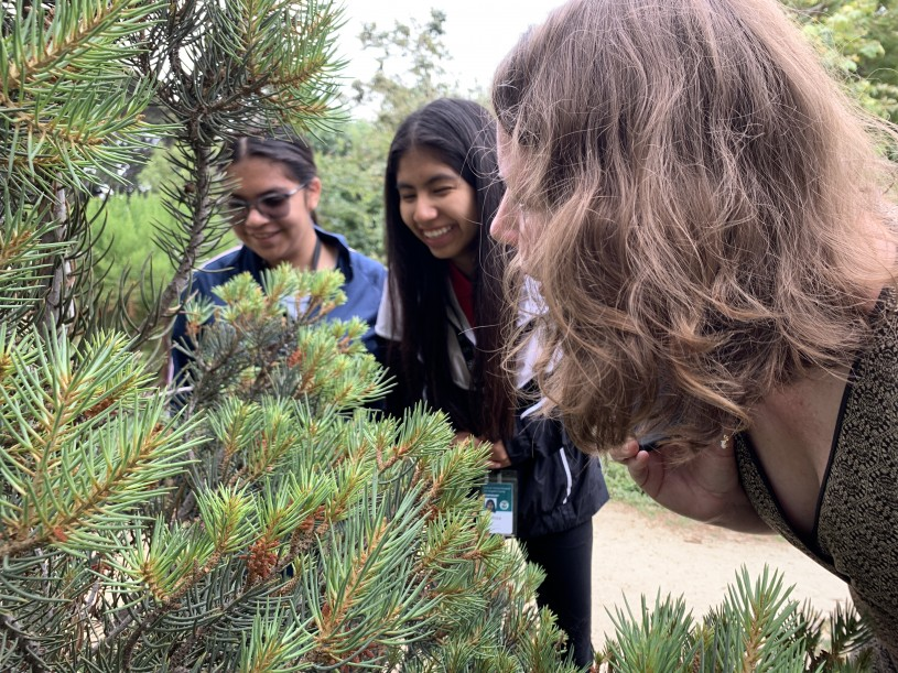 Maya, Melissa, and Amy look at insects on a bush