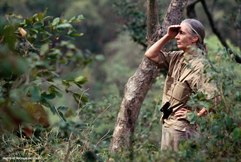 Jane Goodall making an observation outdoors