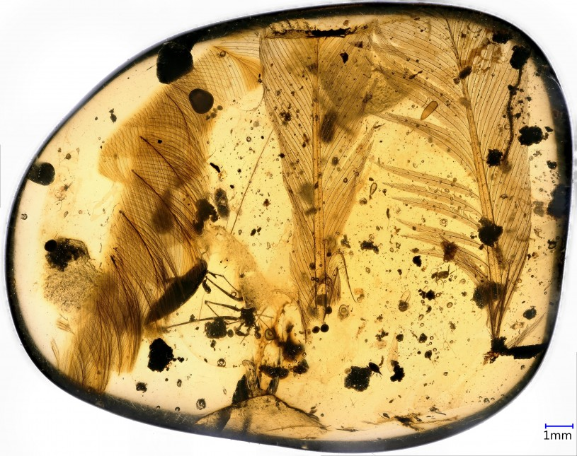 Dinosaur Feather in Amber