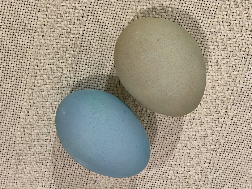 two eggs, one green one blue drying on a table cloth
