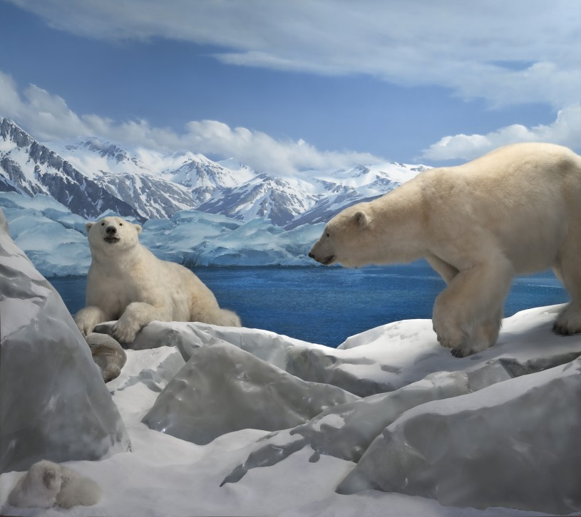 NHM Diorama with Polar Bear