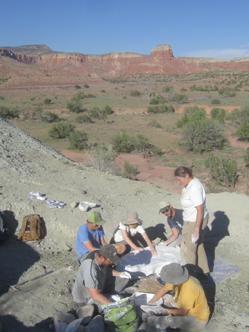 Field team working in the Late Triassic Hayden Quarry at Ghost Ranch, 2018. Image by Dr. Nathan Smith, Dinosaur Institute, NHMLAC