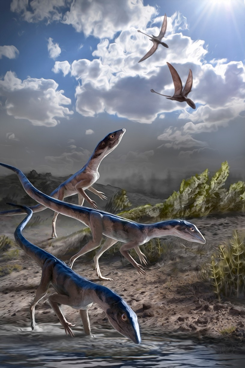 212 million years ago, in what is now Ghost Ranch, New Mexico, a group of Dromomeron romeri pause for a drink while several pterosaurs, now known to be their close evolutionary relatives, fly overhead. Image by Stephanie Abramowicz, Dinosaur Institute, NHMLAC