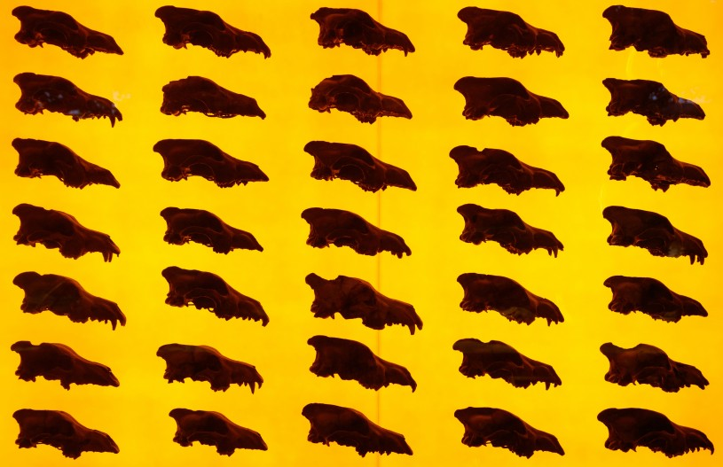 dire wolf wall