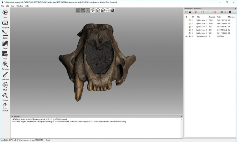 3D scan of mountain lion skull