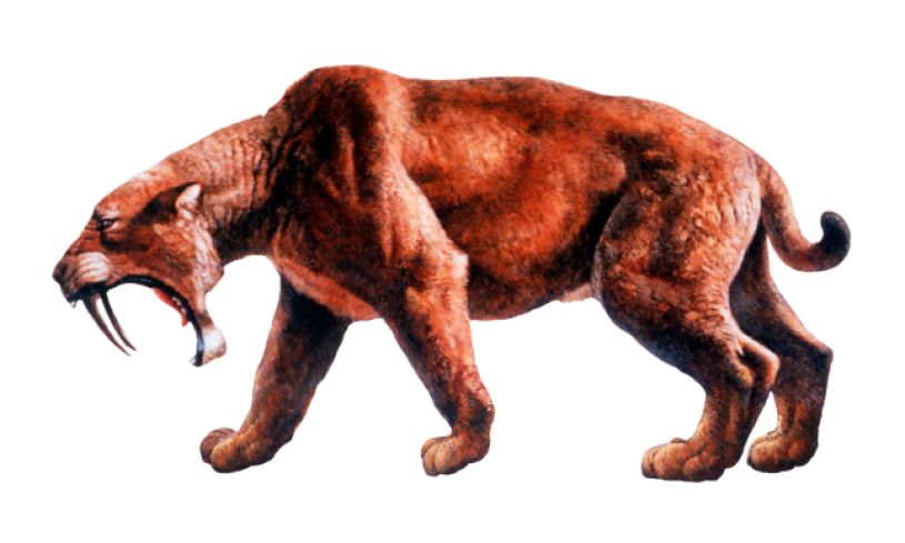 Profile illustration of saber-toothed cat