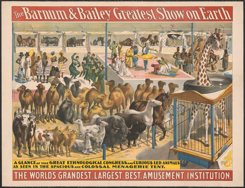 An 1895 Barnum and Bailey circus poster featuring both bactrian and dromedary camels.